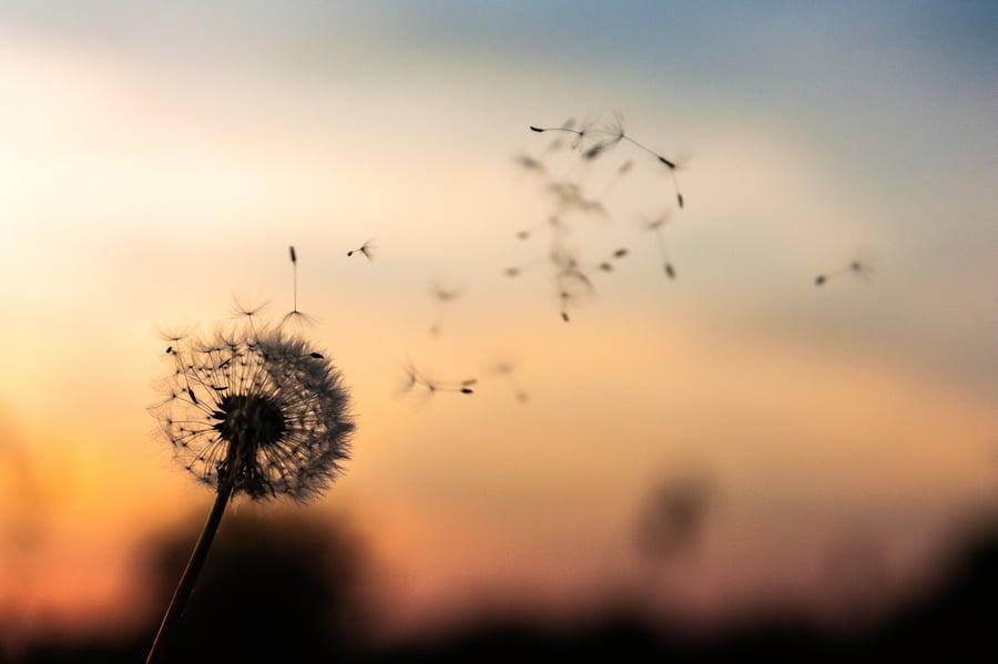Mindfulness dawid-zawila-279998-unsplash